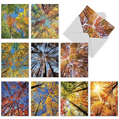 M3006 Over The Top: 10 Assorted Thank You Note Cards Featuring Colorful, Nature Inspired Photography Of Autumnal Trees Reaching Skyward, w/White Envelopes.