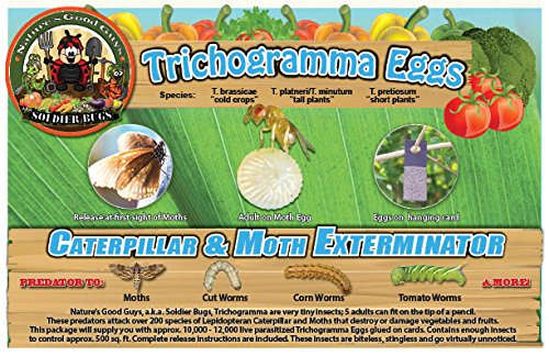 Bug Sales Caterpillar & Moth Exterminator- Trichogramma 3 Squares/12,000 Eggs by Bug Sales