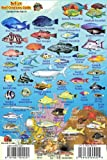 "Belize Reef Creatures Guide Franko Maps Laminated Fish Card 4"" x 6"""