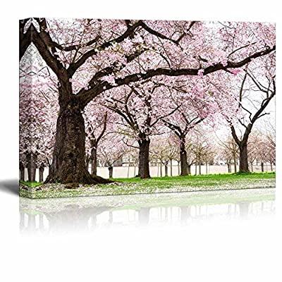 Blossoming Cherry Trees in an Ornamental Garden Pastel Colors with Dreamy Feel - Canvas Art Wall Art - 16