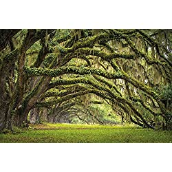 Avenue of green OakTrees wall decoration / Mural Summer Glade Motiv - XXl wall paper by GREAT ART (55 Inch x 39.4 Inch)