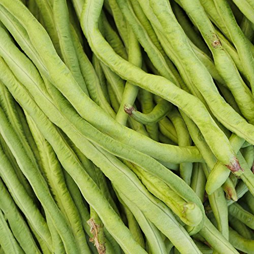 California Black-Eye Bush Beans - 50 Lb Bulk - Non-GMO, Heirloom - Black-Eyed Peas (Cowpeas) - Vegetable Garden Seeds - Bush Pea