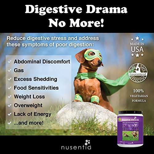 Image of NUSENTIA Enzyme Miracle | Pet Enzymes (Advanced Plant-Based Powder) - 100 Servings - Systemic & Digestive Enzymes - Natural Supplement