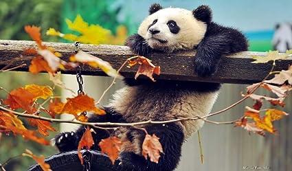 Puzzle 1000 Piezas Linda Panda Escalada Classic Puzzle 3D ...