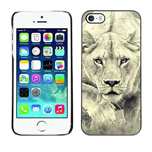 TopCaseStore / caoutchouc Hard Case Housse de protection la Peau - Lion Photo Female Hunting Safary Big Cat - Apple iPhone 5 / 5S