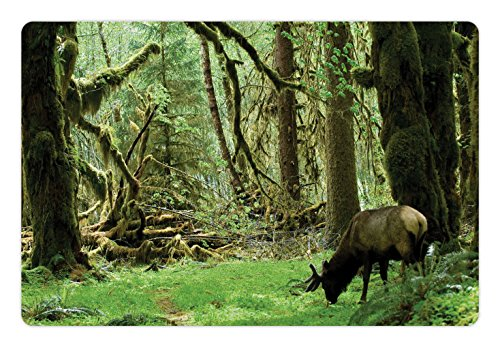 for Food and Water by Ambesonne, Roosevelt Elk in Rainforest Wildlife National Park Washington Antlers Theme, Rectangle Non-Slip Rubber Mat for Dogs and Cats, Green Brown (Roosevelt Cabin)