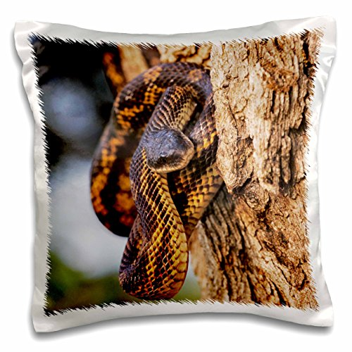 Texas Rat Snake (Danita Delimont - Snakes - Texas Rat Snake, Lake Corpus Christi, Texas - NA02 RNU0809 - Rolf Nussbaumer - 16x16 inch Pillow Case (pc_84627_1))
