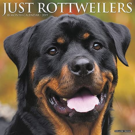 Amazoncom Just Rottweilers 2019 Wall Calendar Dog Breed Calendar