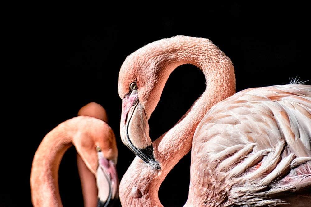 Flamingo Profiles Self Adhesive Peel Stick Wall Mural 48 X72