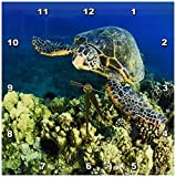 3dRose dpp_89950_1 Green Sea Turtle, Makena SP, Maui, Hawaii – US12 SWS0152 – Stuart Westmorland – Wall Clock, 10 by 10-Inch For Sale