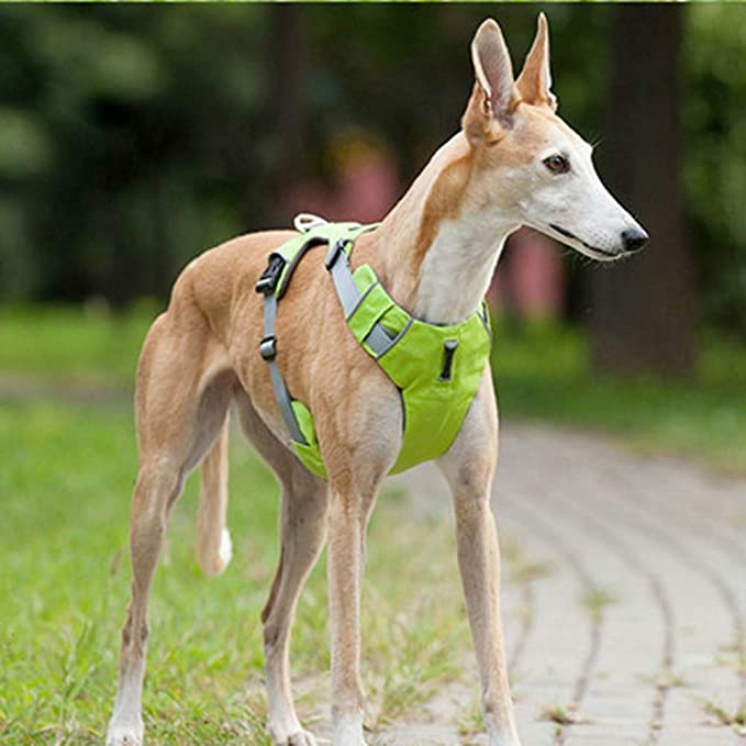 Feidaeu Chaleco De Entrenamiento para Perros Mascotas Reflectante ...