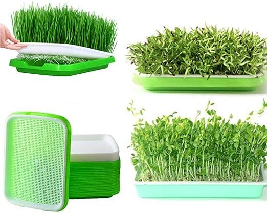 LVPY - Juego de 5 cestas hidropónicas de dos niveles sin tierra para germinación de semillas con tapa para jardín y hogar: Amazon.es: Hogar