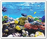 JP London POS2384 uStrip Peel and Stick Removable Wall Decal Sticker Mural Undersea Coral Reef Find Fish Nemo, 24-Inch by 19.75-Inch