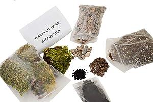 9GreenBox - Terrarium/Fairy Garden Kit - Create Your Own Living Terrarium or Fairy Garden