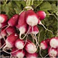 Package of 500 Seeds, French Breakfast Radish (Raphanus sativus) Non-GMO Seeds By Seed Needs