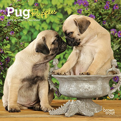 Pug Puppies 2019 7 x 7 Inch Monthly Mini Wall Calendar, Animals Dog Breeds Puppies (Multilingual Edition)