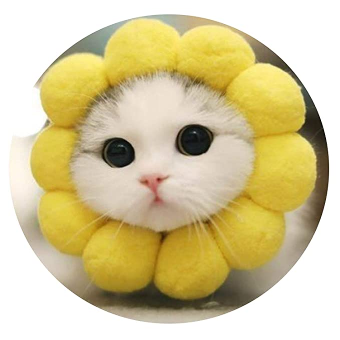Young cat Takes Pictures of Cute Yellow cat Circle pet cat Hats pet Clothes cat Clothes