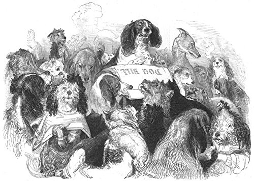 - DOGS. The Dog Bill Committee - 1844 - old antique vintage print - engraving art picture prints of Dogs Dogs - The Illustrated London News