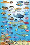 "Guam Coral Reef Creatures Guide Franko Maps Laminated Fish Card 4""""x 6"""