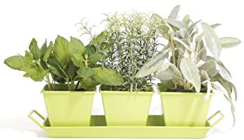Indoor Windowsill Metal Herb Garden Kit