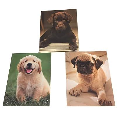 Studio C Carolina Pad 3 Folder Set, Puppy Paws (Puppy Eyes, Outdoor Playtime, Pondering Pug): Toys & Games