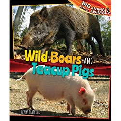 Wild Boars and Teacup Pigs (Big Animals, Small Animals) by Henry Thatcher (2014-01-06)