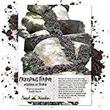Package of 5,000 Seeds, Mother of Thyme/Creeping Thyme (Thymus...