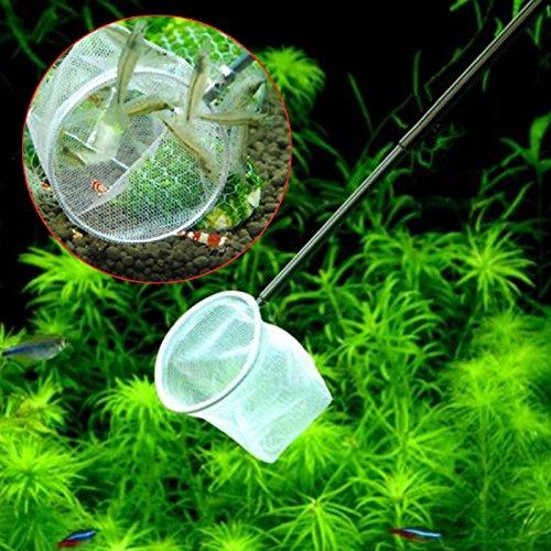3d Aquarium Small Fish Shrimp Catching Net 5cm Square Round Shape ZSZ4781 Random Color Delivery (Round)