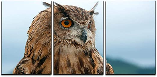 VIVID ARTS A LONG EARED OWL FOR HOME /& GARDEN STUNNING AND ULTRA REALISTIC