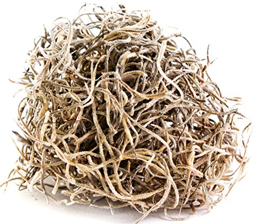 SuperMoss (26939) Spanish Moss Preserved, Natural, 10lbs by Super Moss (Image #5)