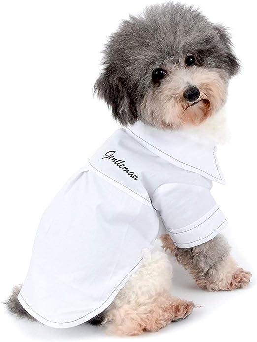 AYWJ Camisa Casual de Caballero para Perro pequeño Gato niño Botton Abajo Camisa Tejida Ropa de Cachorro (Color : White, Size : L): Amazon.es: Productos para mascotas