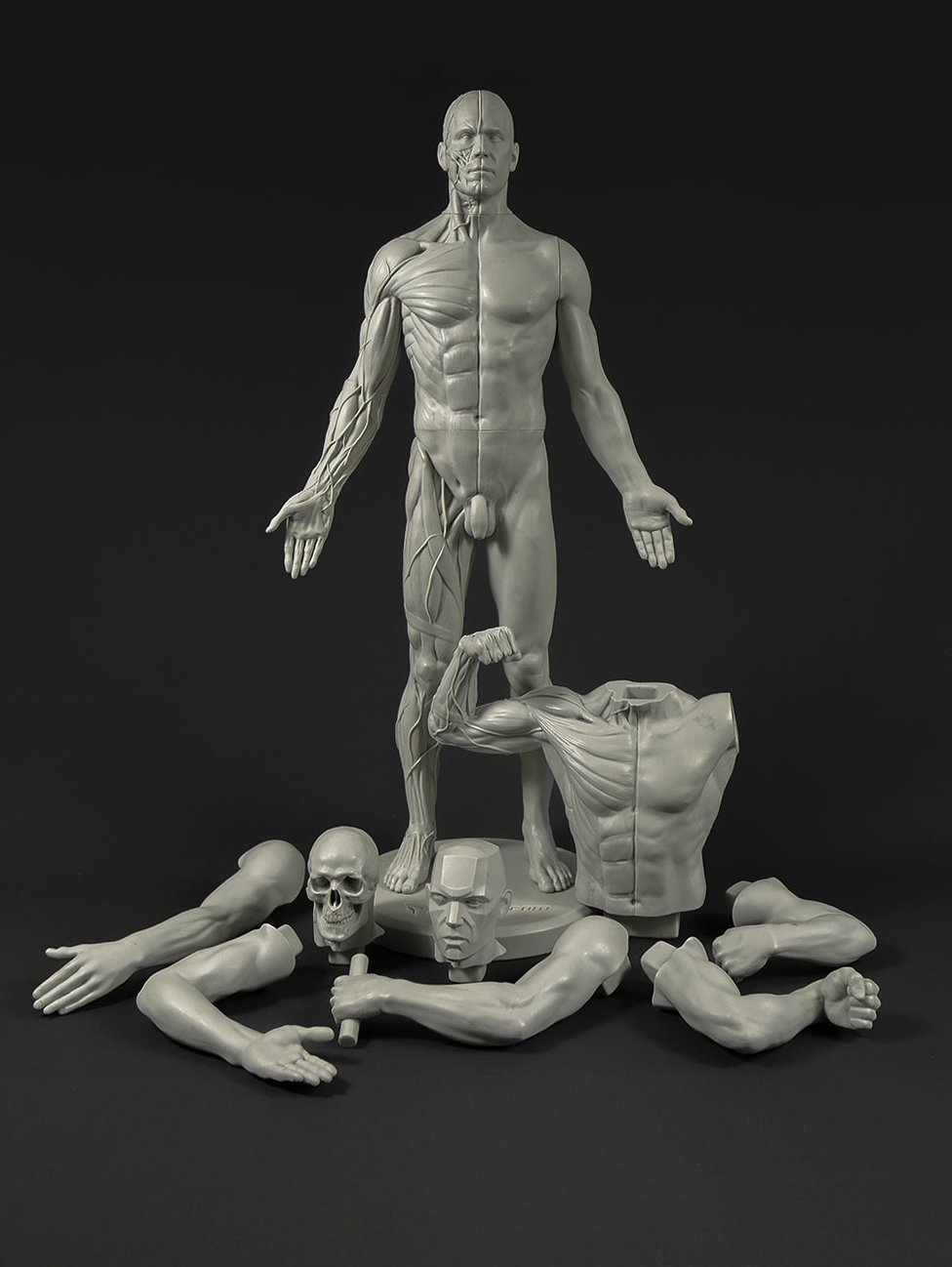Male Adaptable Anatomy Figure: 13.4-inch Anatomical Reference for Artists (Grey)
