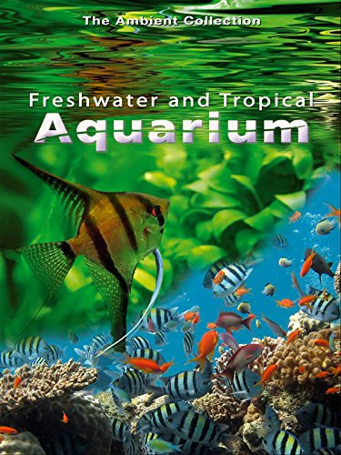freshwater-and-tropical-aquarium