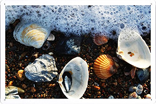 Tin Sign Shell (Planet Scene Poster - Seashells On Beach Tin Sign (8