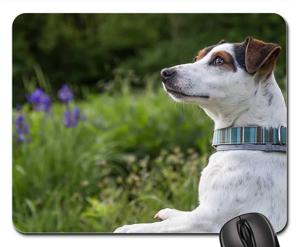 犬用マウスパッド 1122-008 260*210*3 mm B07L4TZXFW Fl11 220*180*3 mm 220*180*3 mm|Fl11