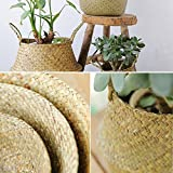 Natural Craft Large Size Seagrass Belly Basket