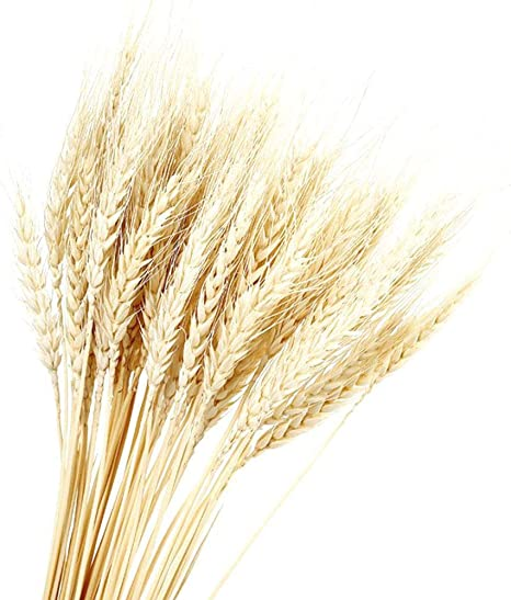XanSpoden 100PCS Dry Wheat Grass Natural Dried Flowers Bouquet for DIY Design Wedding Graduation Ceremony Home Office Kitchen Party Church Decorations Photography Props