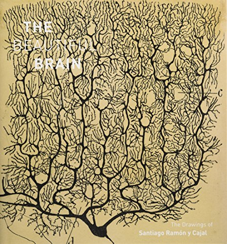 Pdf Medical Books Beautiful Brain: The Drawings of Santiago Ramon y Cajal