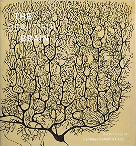 Beautiful Brain The Drawings Of Santiago Ramon Y Cajal 9781419722271 Medicine Health Science Books Amazon Com