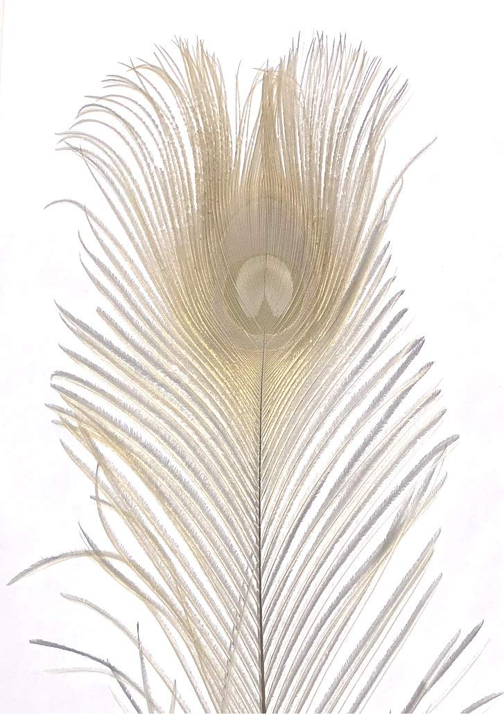 per 25 American Feathers Eyed Peacock Tail Feathers 30-35 Dyed Bleached Tan