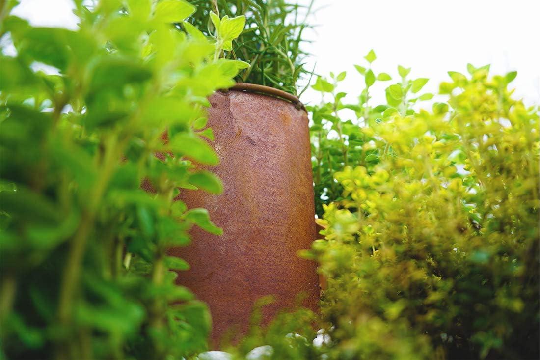 Novaliv – Espiral de Hierbas, óxido Natural, Caracol para Plantas ...
