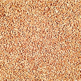 product image for Grain Place Foods Non-GMO Organic Hard Red Winter Wheat 2lb Bag