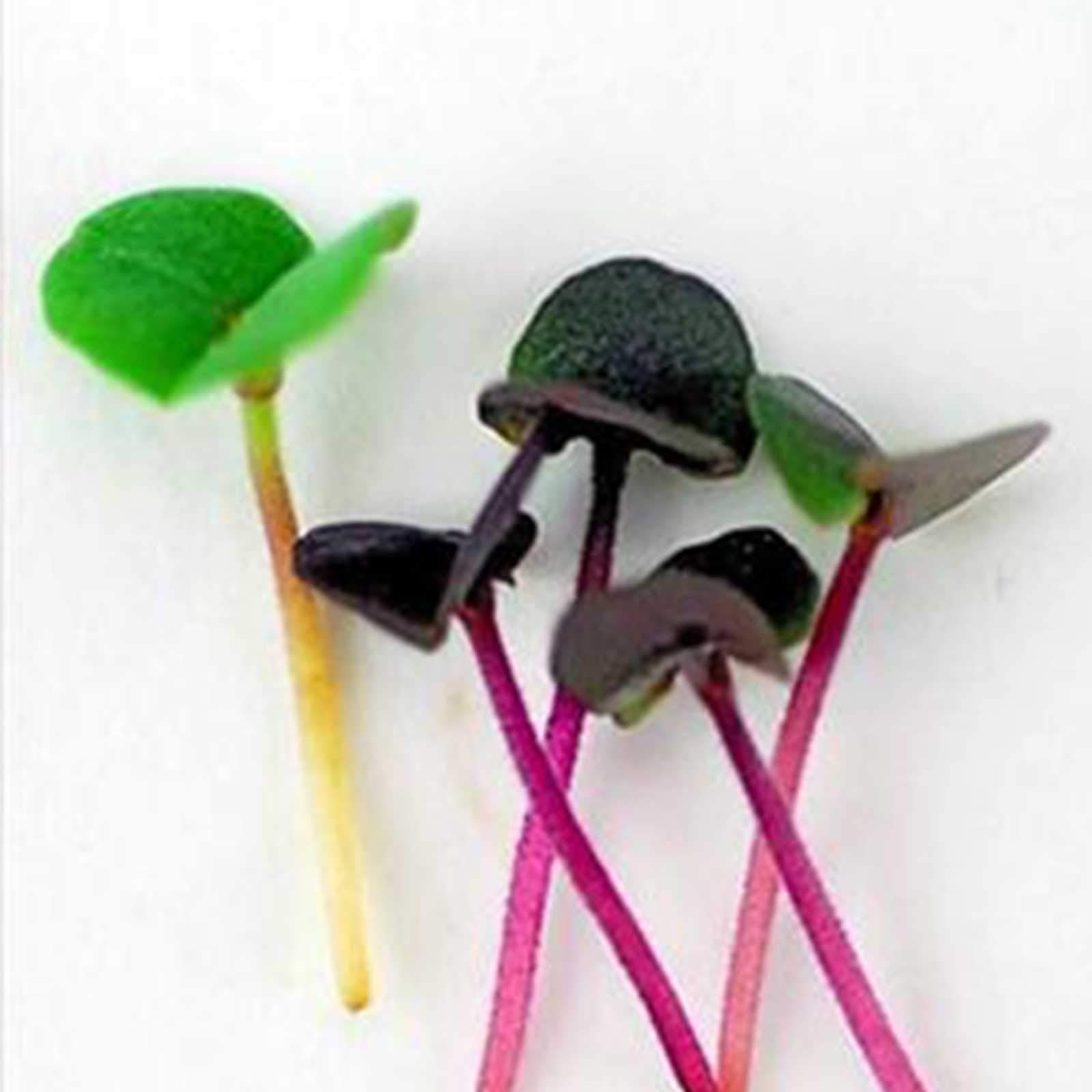 Deluxe Exotic Microgreens Seed Assortment | 12 Non GMO Varieties Including Chia Tatsoi, Pak Choi, Cress And More | Add Some Exotic Highlights To Your Cooking by Handy Pantry (Image #3)