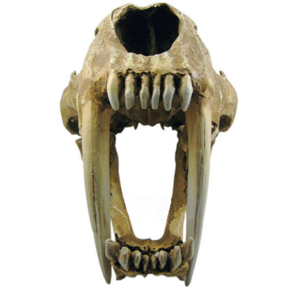 Gmasking Resin Smilodon Sabertooth Tiger 1:1 Skull Replica by Gmasking (Image #3)