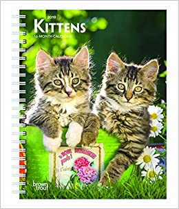 kittens puppies 2019 12 x 12 inch monthly square wall calendar with foil stamped cover animals cute kittens multilingual edition