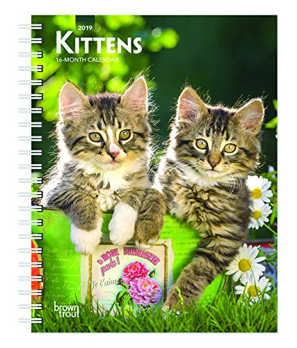 Kittens 2019 6 x 7.75 Inch Weekly Engagement Calendar, Animals Kittens (Multilingual Edition)