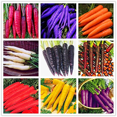 Bureze Egrow 500 Pcs/Pack Colorful Carrot Seeds Red White Purple Origanic Healthy Vegetable Plant Seed