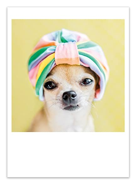 Amazon Birthday Greeting Card Palm Press Inc Chihuahua Dog