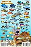 "Bermuda Reef Creatures Guide Franko Maps Laminated Fish Card 4"" x 6"""