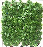 Artificial Hedge Plant Privacy Fence Screen , Suitable for Both Outdoor or Indoor , Garden, Backyard , Maple Green Artificial Hedge 20 x 20 Inch (12 pack)